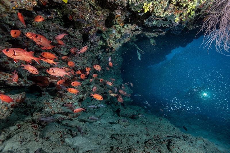 subacquea alle isole Maldive