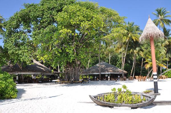 Aaavee Nature's Paradise bar