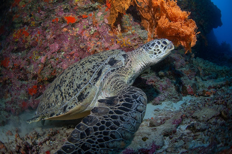 la Barriera corallina, reef alle Isole Maldive