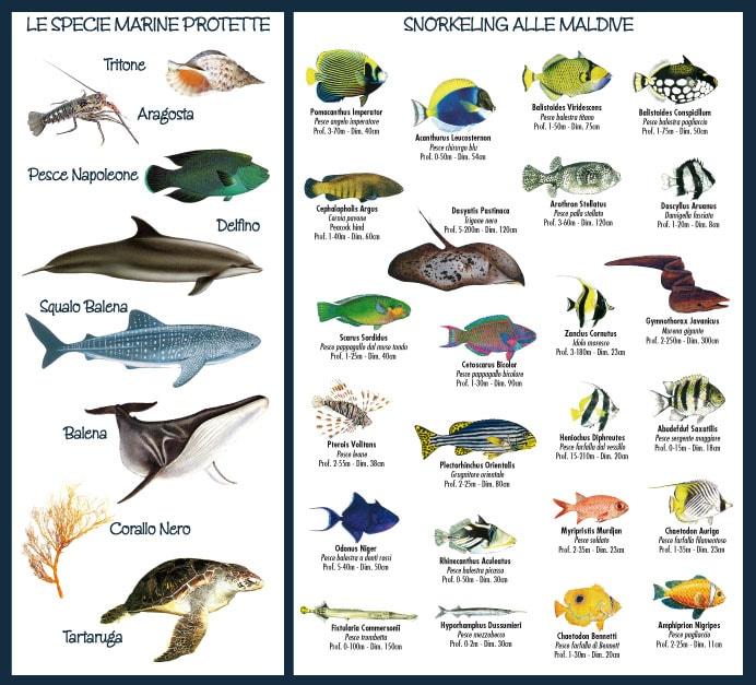 Proteggiamo le Maldive Specie protette e Snorkeling