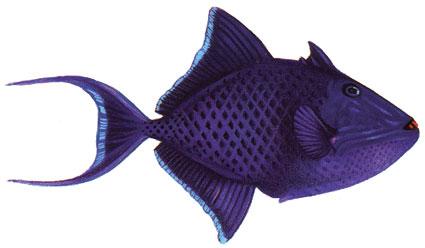 Ricerca Pesci Il Mondo Sommerso Alle Isole Maldive Mondomaldive