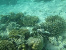 Vilamendhoo Island Resort Ari Sud Maldive 1