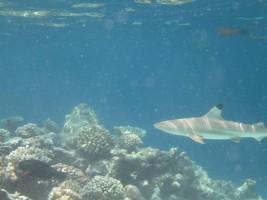 Vilamendhoo Island Resort Ari Sud Maldive 11