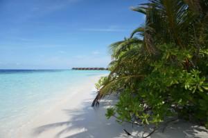 Vilamendhoo Island Resort Ari Sud Maldive 14