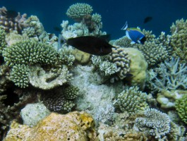 Vilamendhoo Island Resort Ari Sud Maldive 15