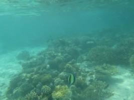 Vilamendhoo Island Resort Ari Sud Maldive 22