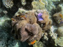 Vilamendhoo Island Resort Ari Sud Maldive 36