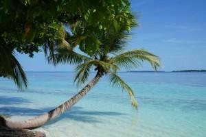Vilamendhoo Island Resort Ari Sud Maldive 38