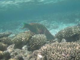 Vilamendhoo Island Resort Ari Sud Maldive 39