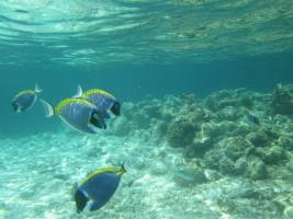 Vilamendhoo Island Resort Ari Sud Maldive 50