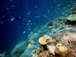 Vilamendhoo Island Resort Ari Sud Maldive 51