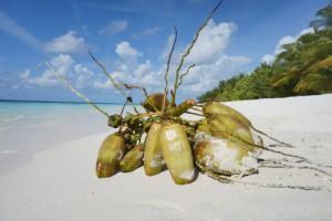 Vilamendhoo Island Resort Ari Sud Maldive 76