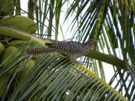 Vilamendhoo Island Resort Ari Sud Maldive 3