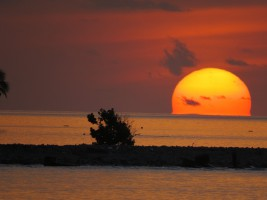 Vilamendhoo Island Resort Ari Sud Maldive 10
