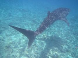Vilamendhoo Island Resort Ari Sud Maldive 17