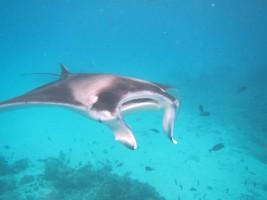 Vilamendhoo Island Resort Ari Sud Maldive 18