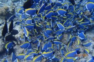 Vakarufalhi Maldives Ari Sud Maldive 40