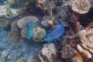 Vakarufalhi Maldives Ari Sud Maldive 47