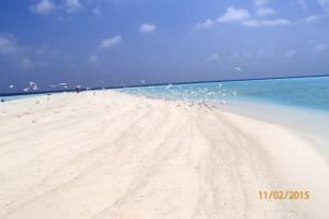 Vakarufalhi Maldives Ari Sud Maldive 54