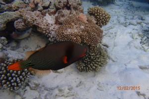 Vakarufalhi Maldives Ari Sud Maldive 61