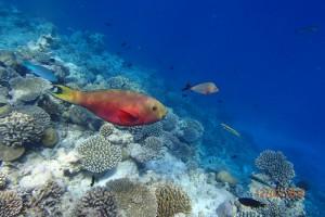 Vakarufalhi Maldives Ari Sud Maldive 62