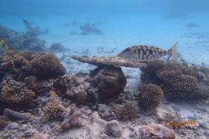 Vakarufalhi Maldives Ari Sud Maldive 64