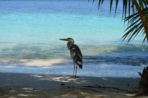Vilamendhoo Island Resort Ari Sud Maldive 13