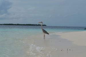 Vilamendhoo Island Resort Ari Sud Maldive 12