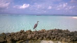 Velidhu Island Resort Ari Nord Maldive 30