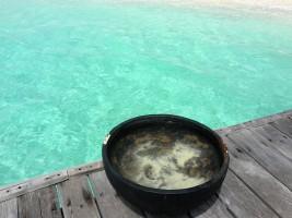 Thudufushi Diamonds Island Resort Ari Sud Maldive 5