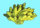Barriera corallina e Invertebrati alle isole Maldive - Spugne