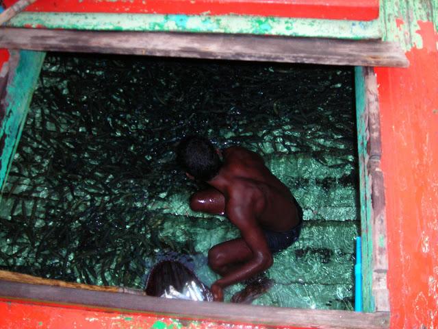 mugura pesca maldive